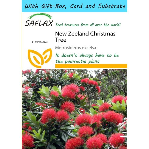 Saflax Gift Set - New Zeeland Christmas Tree - Metrosideros Excelsa - 300 Seeds - with Gift Box, Card, Label and Potting Substrate