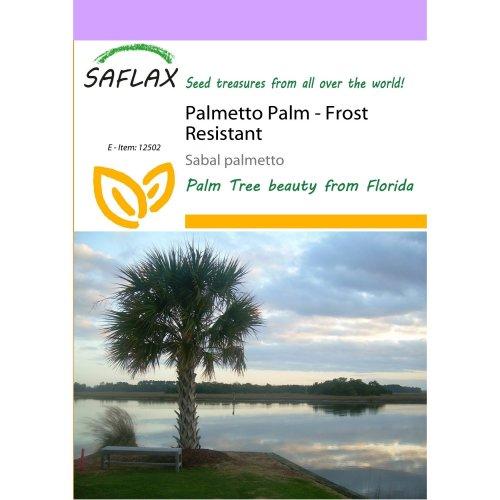 Saflax  - Palmetto Palm - Sabal Palmetto - 8 Seeds