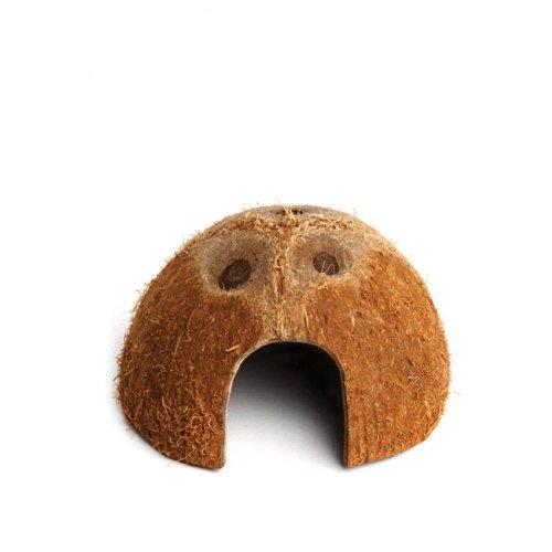 Komodo Coconut Den