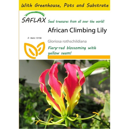 Saflax Potting Set - African Climbing Lily - Gloriosa Rothschildiana - 15 Seeds - with Mini Greenhouse, Potting Substrate and 2 Pots