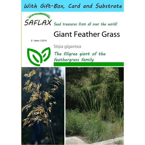 Saflax Gift Set - Giant Feather Grass - Stipa Gigantea - 10 Seeds - with Gift Box, Card, Label and Potting Substrate