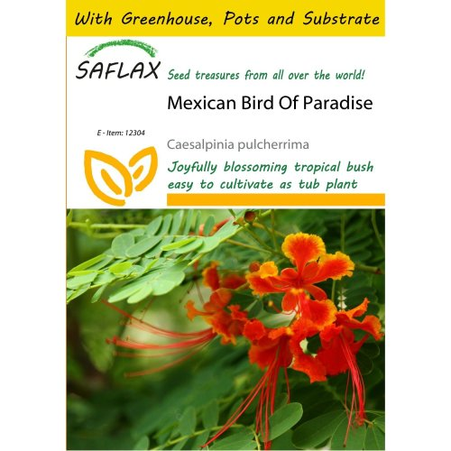 Saflax Potting Set - Mexican Bird of Paradise - Caesalpinia Pulcherrima - 10 Seeds - with Mini Greenhouse, Potting Substrate and 2 Pots