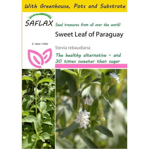 Saflax Potting Set - Sweet Leaf of Paraguay - Stevia Rebaudiana - 100 Seeds - with Mini Greenhouse, Potting Substrate and 2 Pots