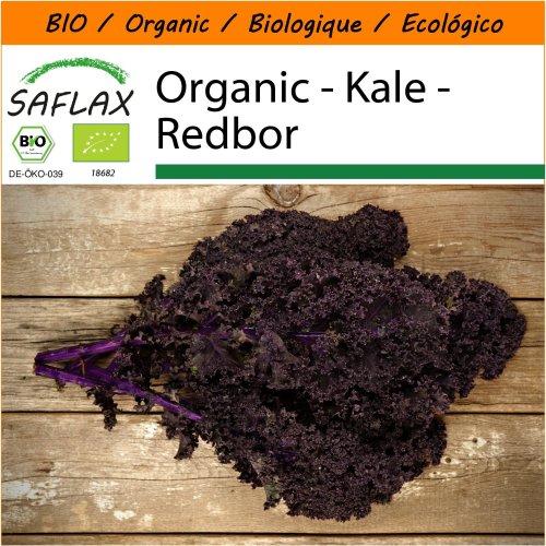 SAFLAX Garden in the Bag - Organic - Kale - Redbor - 50 certified organic seeds  - Brassica