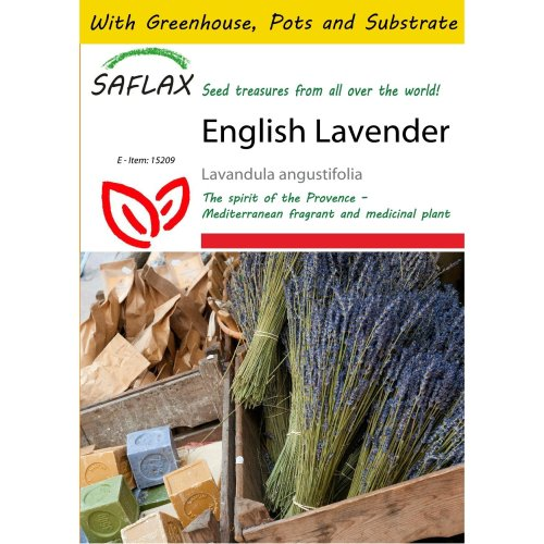 Saflax Potting Set - English Lavender - Lavandula Angustifolia - 150 Seeds - with Mini Greenhouse, Potting Substrate and 2 Pots