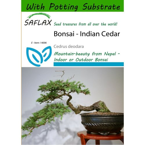 Saflax  - Bonsai - Indian Cedar - Cedrus Deodara - 35 Seeds - with Potting Substrate for Better Cultivation
