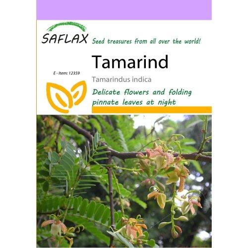 Saflax  - Tamarind - Tamarindus Indica - 4 Seeds