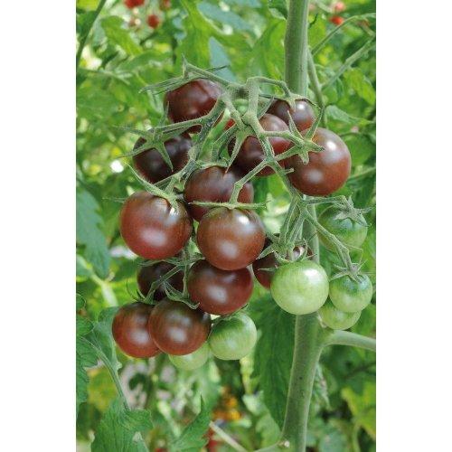 Vegetable - Tomato - Chocolate Cherry - 10 Seeds