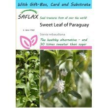 Saflax Gift Set - Sweet Leaf of Paraguay - Stevia Rebaudiana - 100 Seeds - with Gift Box, Card, Label and Potting Substrate