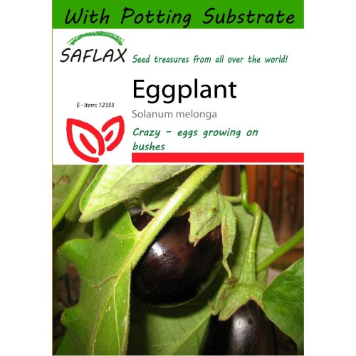 Saflax  - Eggplant - Solanum Melonga - 20 Seeds - with Potting Substrate for Better Cultivation