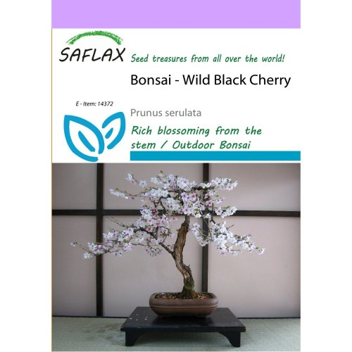 Saflax  - Bonsai - Wild Black Cherry - Prunus Serulata - 30 Seeds