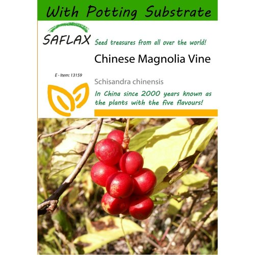 Saflax  - Chinese Magnolia Vine - Schisandra Chinensis - 15 Seeds - with Potting Substrate for Better Cultivation