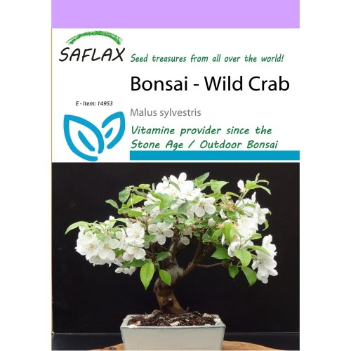 Saflax  - Bonsai - Wild Crab - Malus Sylvestris - 30 Seeds